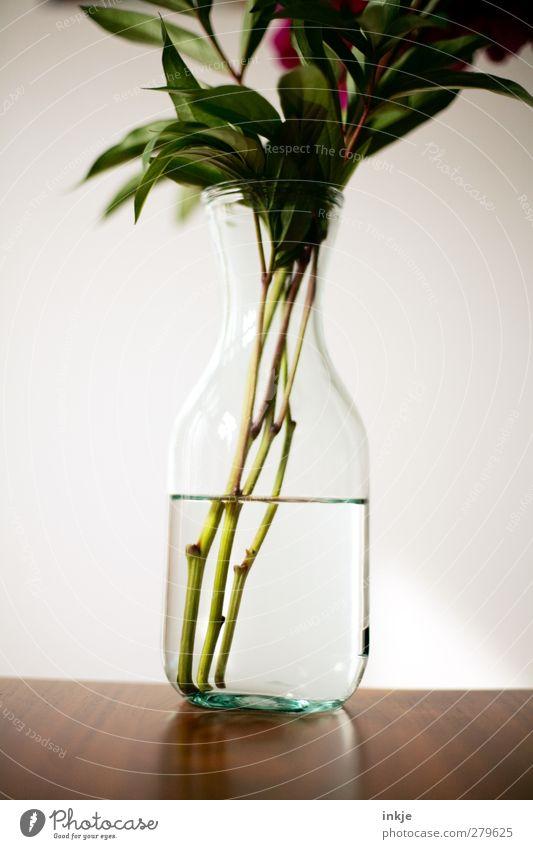 Water Style Decoration Table Flower Bouquet Vase glass vase Simple Fluid Cold Wet Clarity Detail Flower stem Glassbottle Colour photo Subdued colour