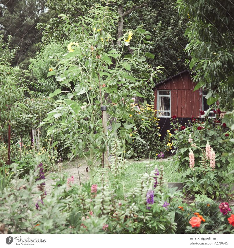 in the green Senses Relaxation Calm Leisure and hobbies Garden Environment Nature Summer Tree Flower Bushes Hut Gardenhouse Natural Many Wild Green Garden plot