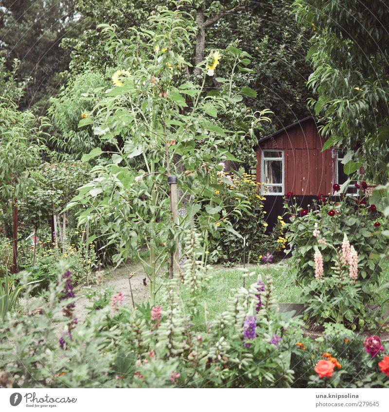 Nature Green Summer Tree Flower Calm Relaxation Environment Garden Natural Leisure and hobbies Wild Bushes Many Hut Garden plot