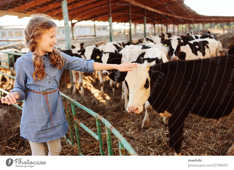 kid girl feeding calf on cow farm. Lifestyle Vacation & Travel Summer Child Infancy Environment Nature Landscape Village Cow Herd Feeding Authentic Friendliness