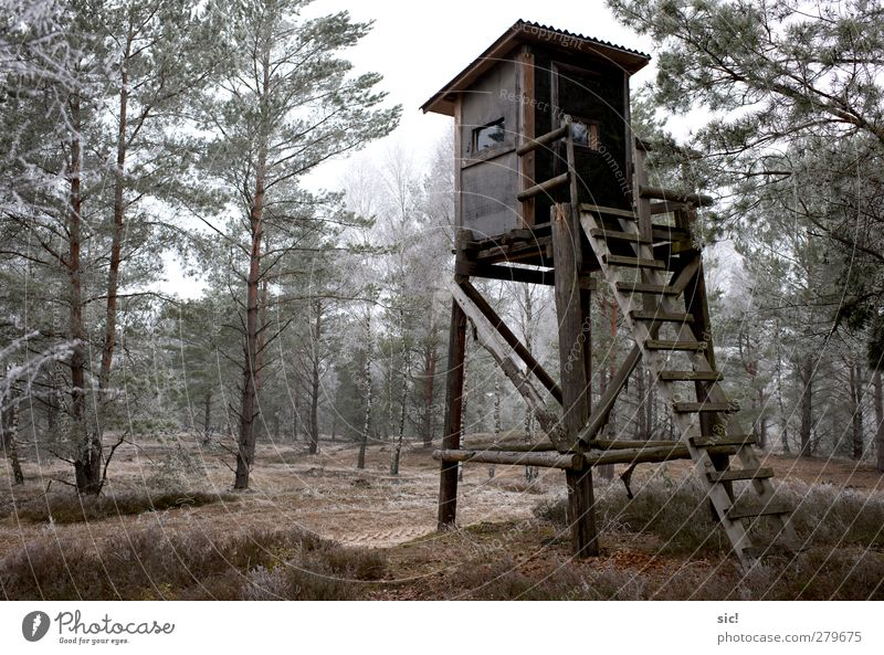 raised hide Hunting Winter Hiking Ice Frost Tree Forest Hunting Blind Lanes & trails Cold Gray Green Loneliness Leisure and hobbies Nature Hoar frost Birch wood