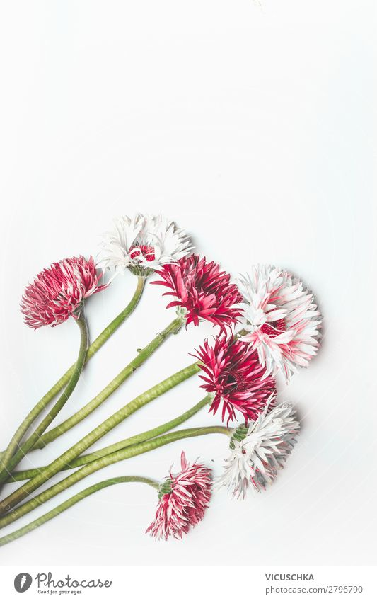 Red and white Gerbera bundle on white Style Design Feasts & Celebrations Nature Plant Flower Leaf Blossom Decoration Bouquet Pink White red bunch desk