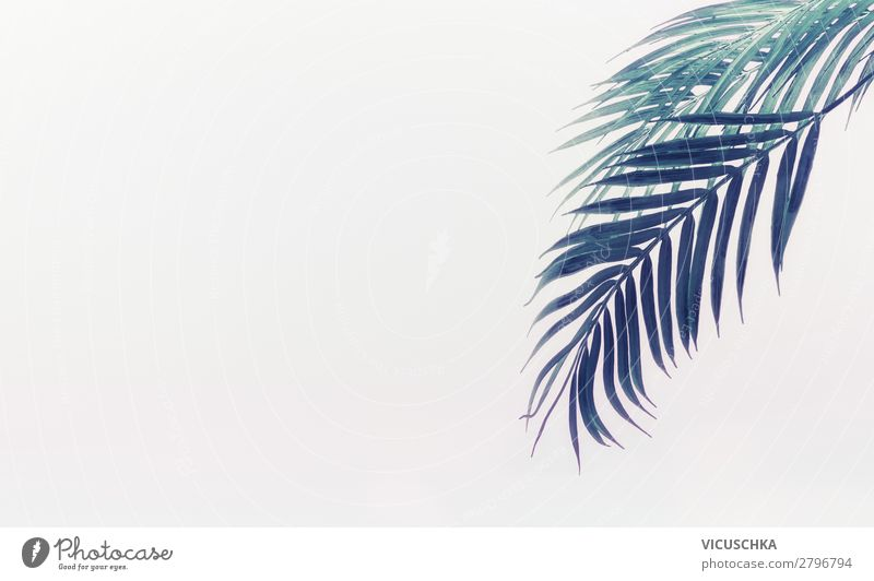 Background with hanging palm leaves Design Beautiful Vacation & Travel Nature Plant Leaf Green Background picture Bright Tropical Palm frond Suspended