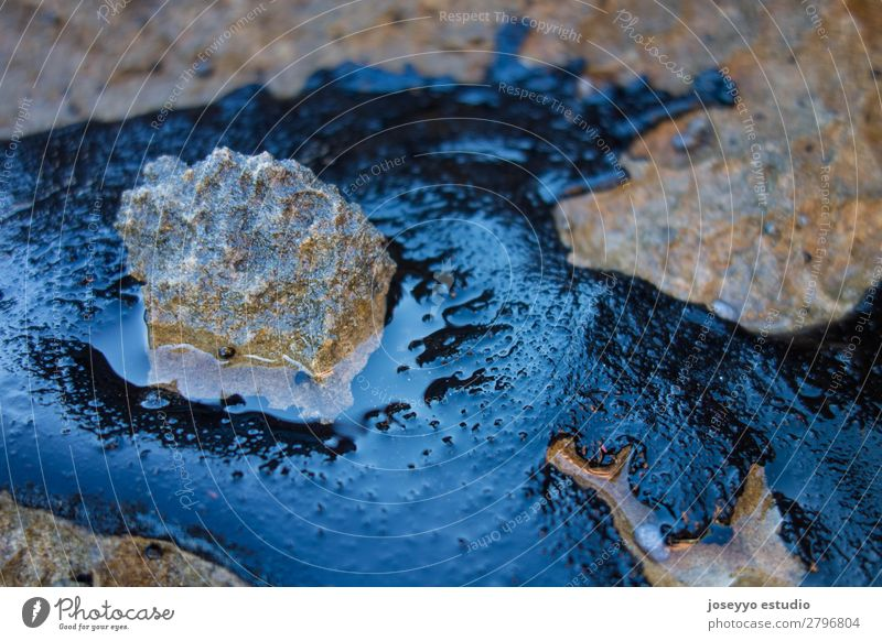 Crude oil spill on a rock from the beach Illness Beach Industry Environment Sand Rock Coast Stone Oil Dirty Black Death Disaster Energy Environmental pollution