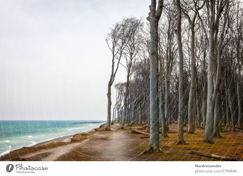 Ghost forest Nienhagen Vacation & Travel Tourism Ocean Waves Nature Landscape Elements Water Sky Clouds Bad weather Wind Tree Grass Forest Baltic Sea