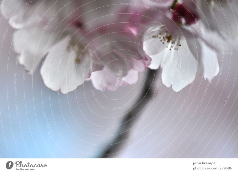 Sky Nature Plant Beautiful White Tree Life Love Blossom Happy Garden Pink Blossoming Joie de vivre (Vitality) Warm-heartedness Romance