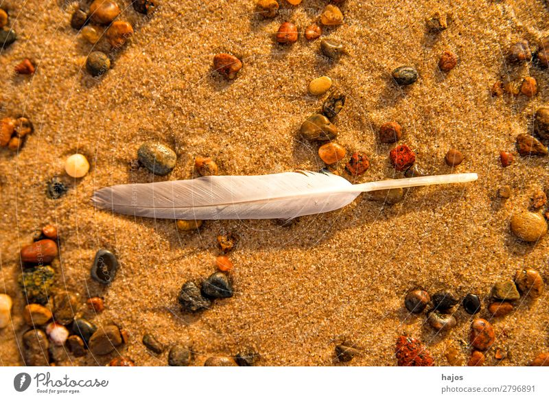 Feather on the beach Beach Nature Sand Bird Beautiful Soft White Seagull pebble Fluffy Animal Doomed still life Colour photo Close-up Macro (Extreme close-up)