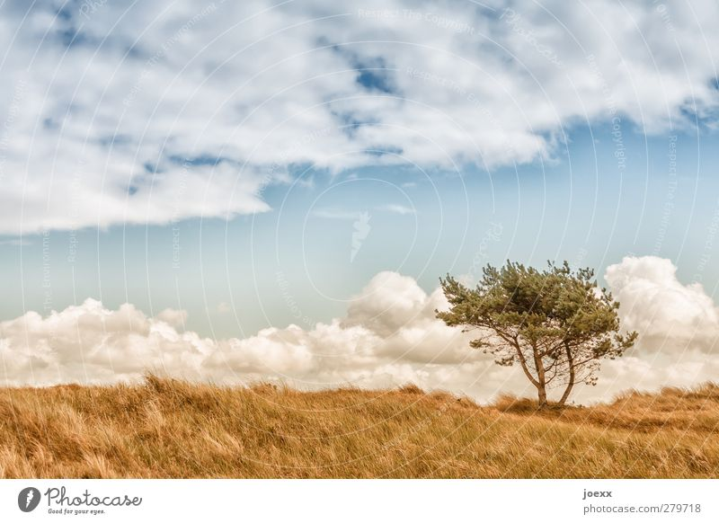 Sky Nature Blue Green White Summer Tree Clouds Landscape Environment Horizon Brown Field Wind Beautiful weather Idyll