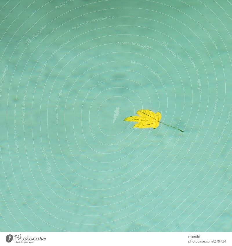 Nature Blue Water Summer Plant Leaf Yellow Autumn Lake Individual Swimming pool Copy Space Autumn leaves Autumnal