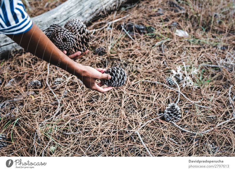 Woman picking up conifer cones near a big tree trunk Ethnic Pine cone Forest Conifer Wood Black Leaf