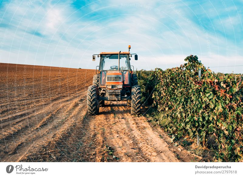 Tractor in a vineyard Machinery Transport Wine Vineyard Nature Field Production