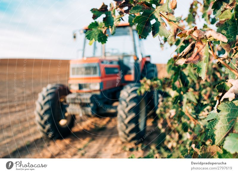 Tractor in a vineyard Machinery Transport Wine Vineyard Nature Field Production Agriculture Rural Farm Engines Wheel Winery Harvest Summer Background picture