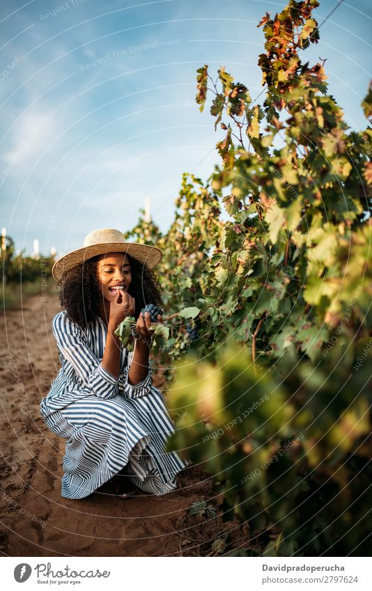 Young black woman eating a grape in a vineyard Winery Vineyard Woman Bunch of grapes Organic Harvest Happy Smiling Agriculture Vertical Green Copy Space Rural
