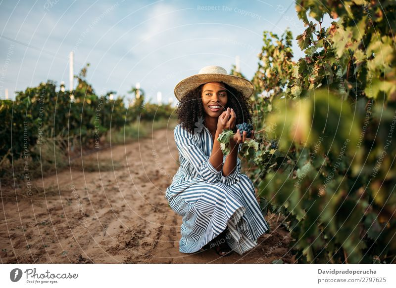 Young black woman eating a grape in a vineyard Winery Vineyard Woman Bunch of grapes Organic Harvest Happy Agriculture Green Smiling Rural tasting grab
