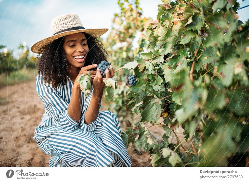 Young black woman eating a grape in a vineyard Winery Vineyard Woman Black Ethnic Bunch of grapes Smiling Horizontal Organic African Harvest Happy Agriculture