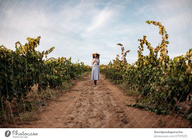Young woman walking in a path in the middle of a vineyard Winery Vineyard Woman Bunch of grapes Walking Organic Harvest Lanes & trails Happy Agriculture Green