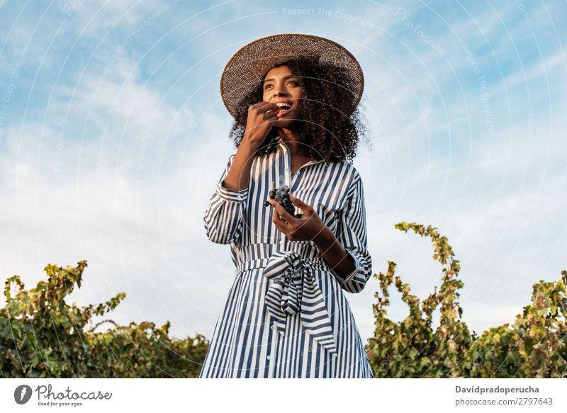 Young woman walking in a path in the middle of a vineyard Winery Vineyard Woman Bunch of grapes Walking Organic Harvest Happy Agriculture Green Accumulation