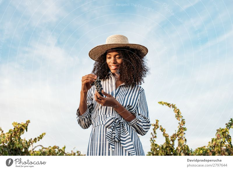 Young woman walking in a path in the middle of a vineyard Winery Vineyard Woman Bunch of grapes Walking Organic Harvest Agriculture Green Accumulation Smiling