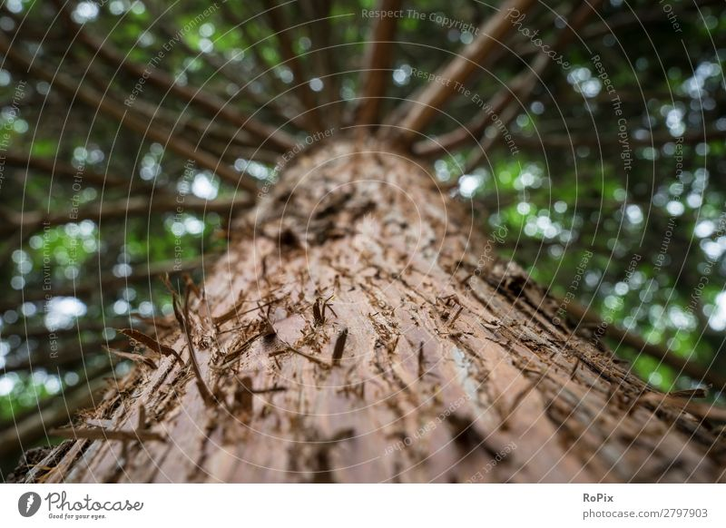 Skywards in the forest Life Senses Relaxation Calm Hiking Agriculture Forestry Craft (trade) Science & Research Environment Nature Plant Climate change Tree