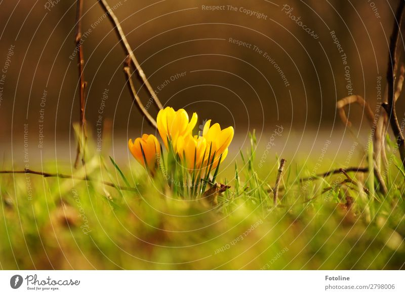 Hello Spring Environment Nature Landscape Plant Flower Blossom Garden Park Meadow Fresh Bright Natural Warmth Brown Yellow Green Spring flowering plant