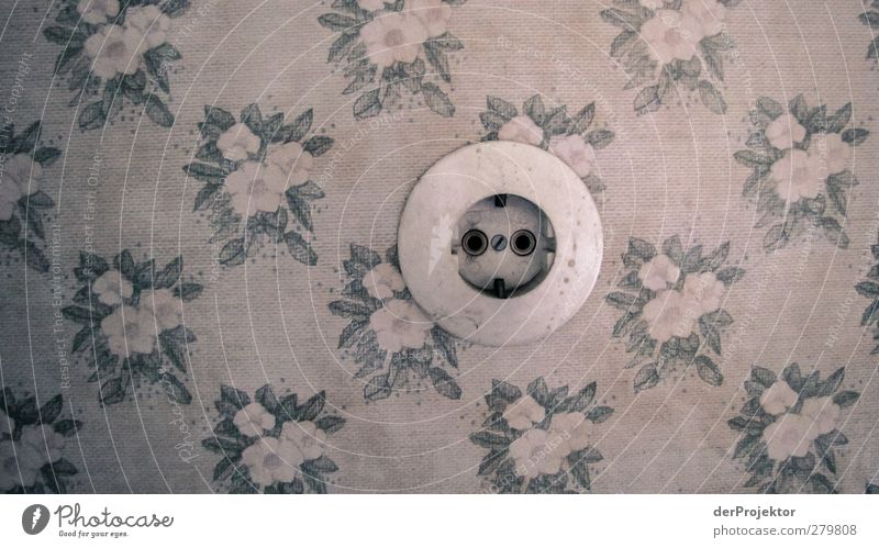 Socket outlet without Euronorm in floral wallpaper Wall (barrier) Wall (building) Authentic Exceptional Beautiful Cute Retro Round Gray flower decoration