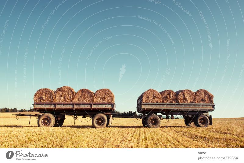 Attachable harvest helpers Grain Summer Agriculture Forestry Environment Nature Landscape Sky Horizon Beautiful weather Warmth Agricultural crop Field Trailer