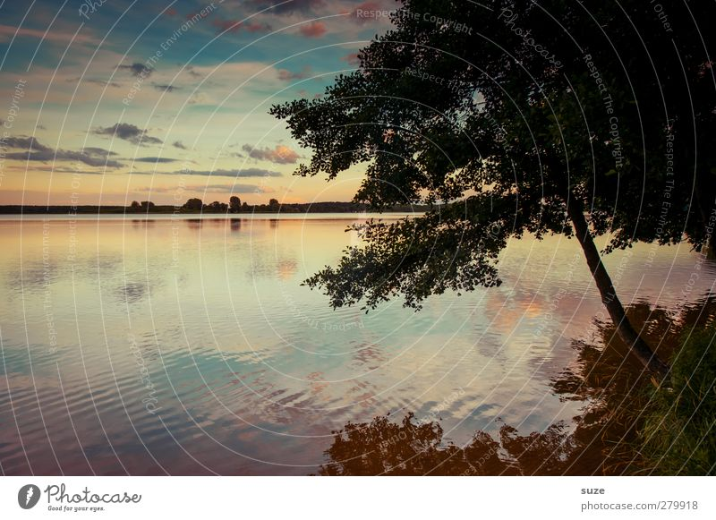 The lake rests still Calm Environment Nature Landscape Elements Water Sky Clouds Horizon Summer Beautiful weather Tree Meadow Lakeside Authentic Dark Natural