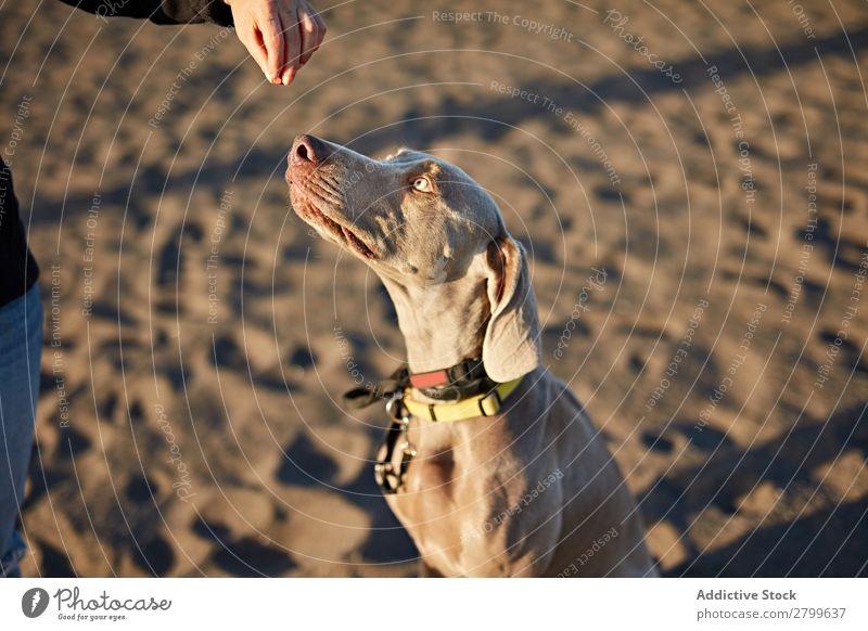 Funny dog on beach Dog Beach Sand Breathe Sunbeam Day Pet Nature Summer Animal Happy Joy Deserted Domestic Purebred Cute Lovely Coast Tongue sticking out Mammal