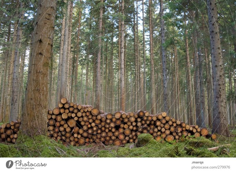 encampments Agriculture Forestry Environment Nature Tree Arrangement Wood Firewood Stack of wood Supply Black Forest Colour photo Exterior shot Deserted