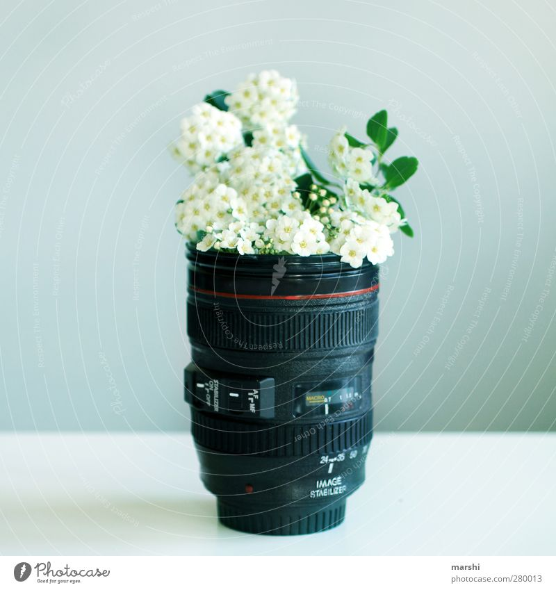 flower photography Leisure and hobbies Plant Flower Beautiful canon Objective Photography Take a photo Bouquet Flower vase Vase Symbols and metaphors
