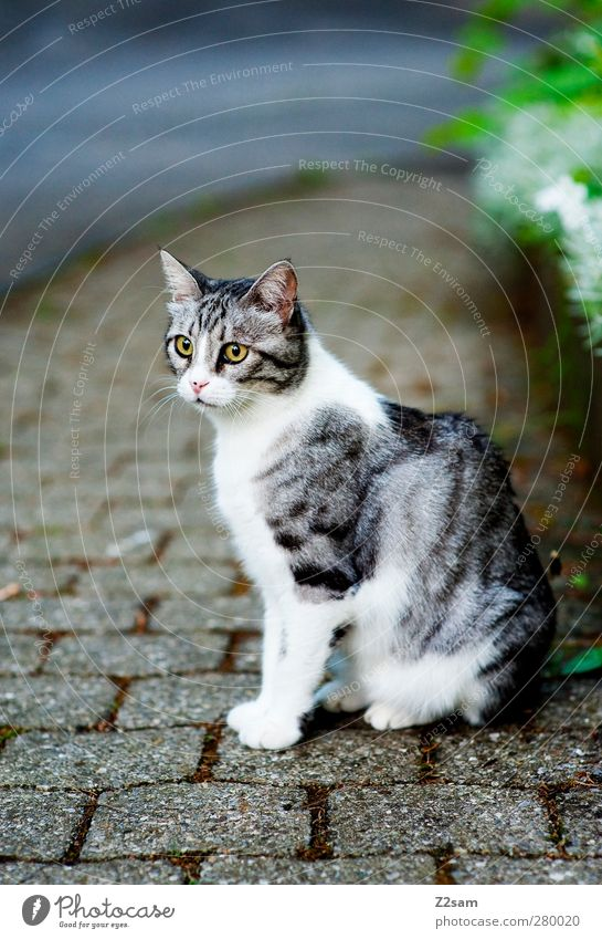 There's the broad! Grass Bushes Street Pet Cat 1 Animal Observe Crouch Looking Sit Esthetic Dark Cold Cute Beautiful Watchfulness Serene Calm Pelt Gray