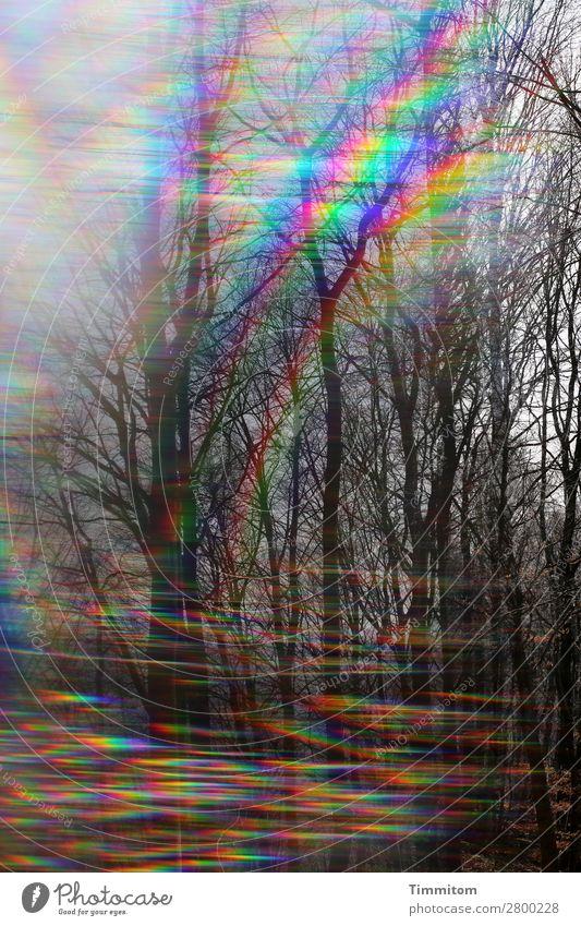 Sky Nature Plant Landscape Forest Life Environment Lanes & trails Emotions Esthetic Curiosity Double exposure Prism