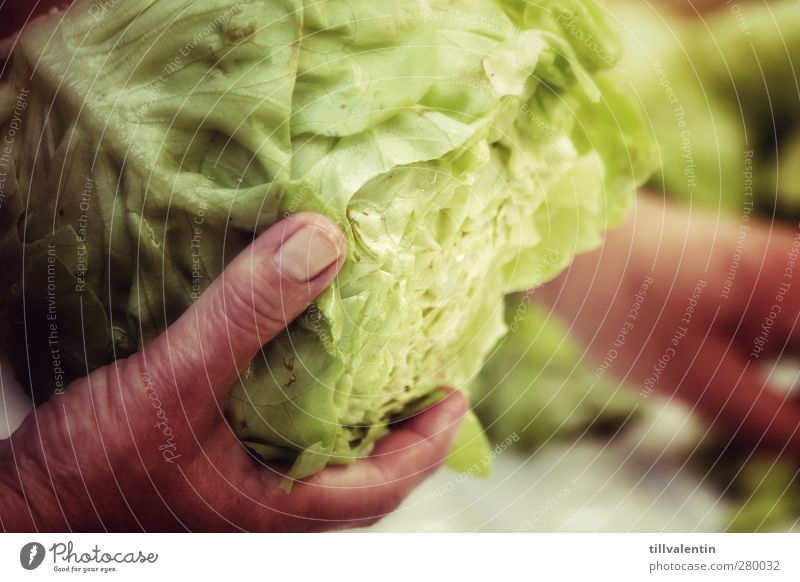 There's the salad. Food Vegetable Lettuce Salad Nutrition Organic produce Plant Bright Delicious Green Foliage plant Fingernail Hand Fingers Cooking Essen