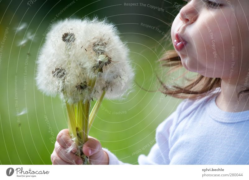 Human being Child Nature Summer Plant Flower Girl Face Environment Meadow Feminine Life Playing Grass Hair and hairstyles Infancy