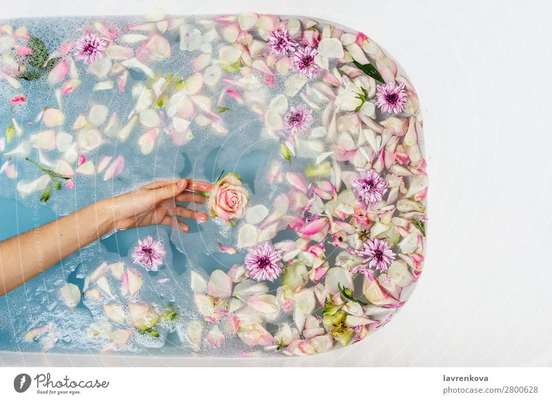 bath filled with water, flowers and petals with woman's hand Woman Fingers Hand Aromatic Art Swimming & Bathing Bathroom Bathtub Beauty Photography Blossom Blue