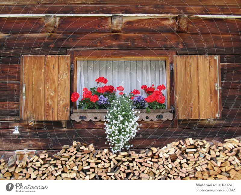 Nature Vacation & Travel White Summer Red Flower Window Wood Style Brown Tourism Living or residing Alps Blossoming Hut Original