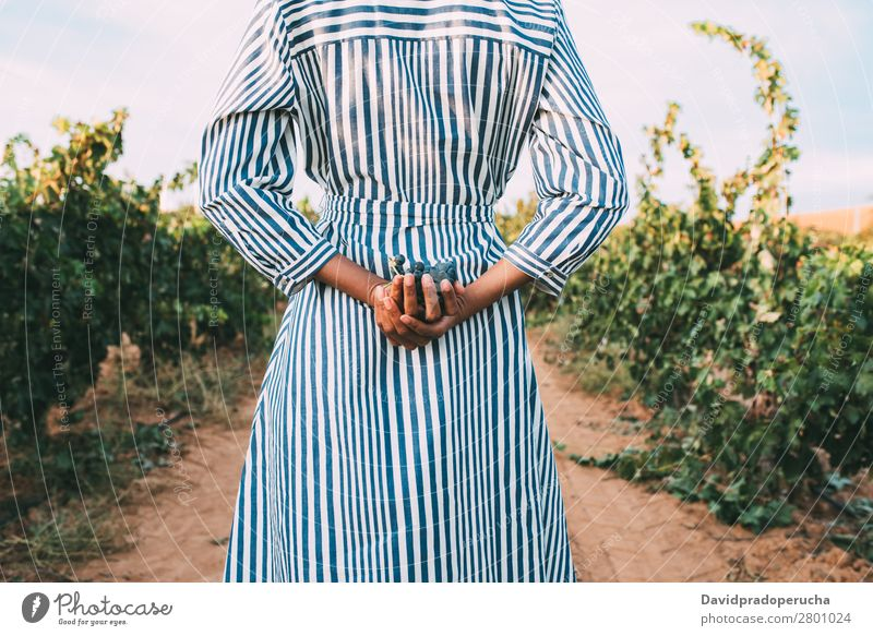 Young woman walking in a path in the middle of a vineyard Winery Vineyard Woman Bunch of grapes Stand Organic Harvest