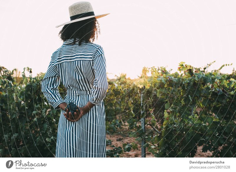 Woman standing in a path in the middle of a vineyard Winery Vineyard Bunch of grapes Stand Organic Harvest