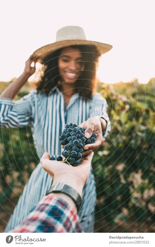 Hands sharing a bunch of grapes with a happy blurred woman Winery Vineyard Woman Bunch of grapes Stand Organic Share