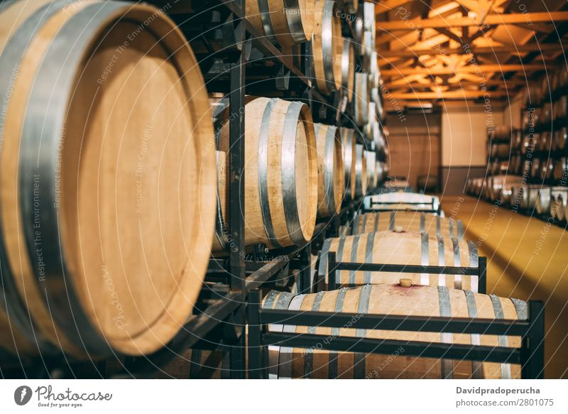 Wine barrel with blue Cabernet grapes in harvest season - a