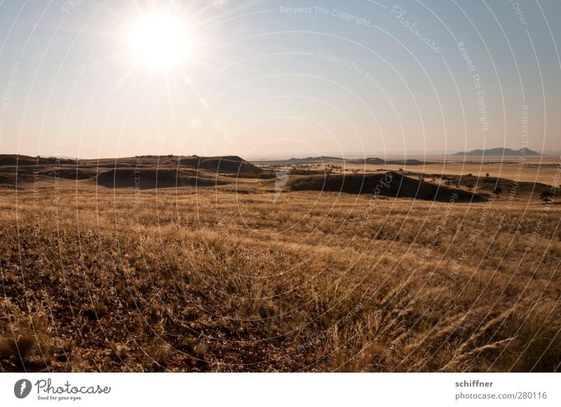Nature Plant Sun Landscape Far-off places Environment Grass Climate Beautiful weather Desert Vantage point Hill Infinity Cloudless sky Drought Steppe