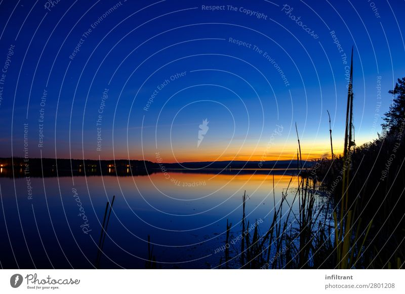 Evening atmosphere at the lake Environment Nature Landscape Water Sky Cloudless sky Sunrise Sunset Common Reed Lakeside Quitzdorfer Reservoir Esthetic Maritime