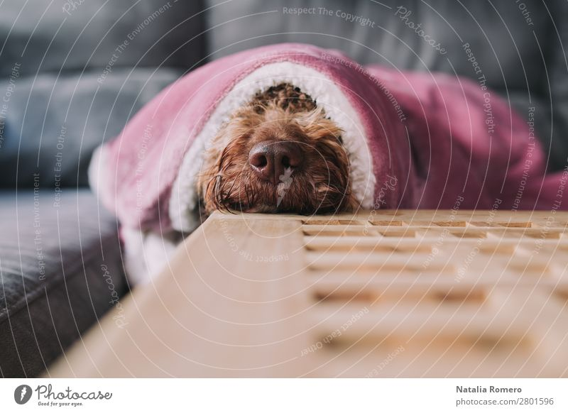 dog rests its snout on a table Dog Beautiful Animal Calm Joy Face Love Emotions Family & Relations Together Brown Friendship Smiling Sit Table Happiness