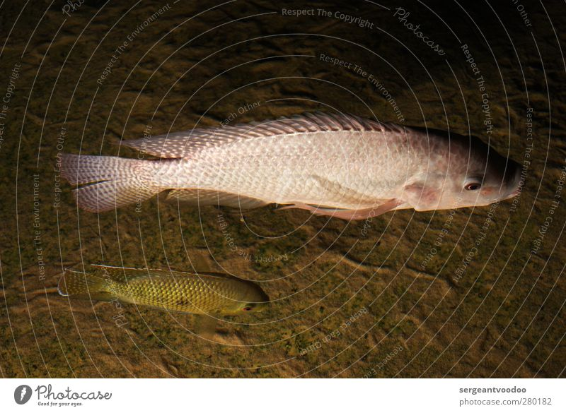 """""""...and Leroy claims that..."""" Fish Fishing (Angle) Beach Nature Animal Water Coast Lakeside River bank Ocean Wild animal 2 Swimming & Bathing Movement"""