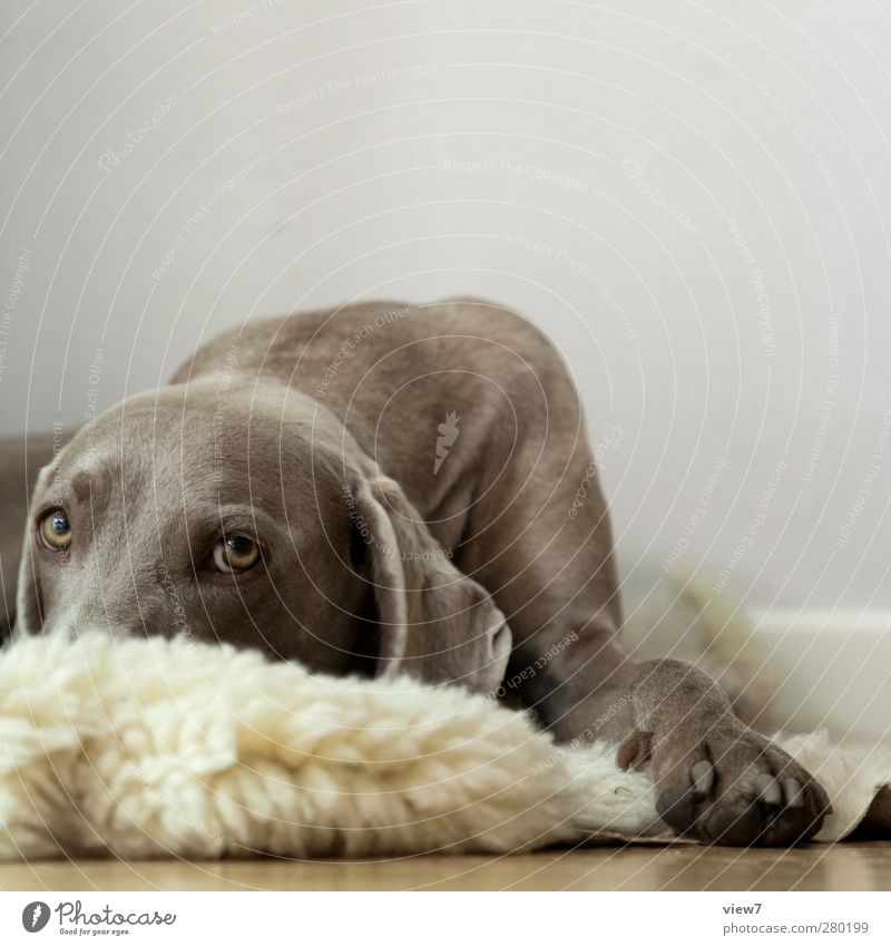 Dog Loneliness Animal Wall (building) Gray Wall (barrier) Interior design Brown Room Elegant Authentic Fresh Beginning Hope Pelt Pure