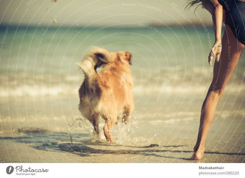 Dog Human being Child Water Vacation & Travel Summer Ocean Girl Joy Beach Animal Feminine Playing Movement Coast Waves