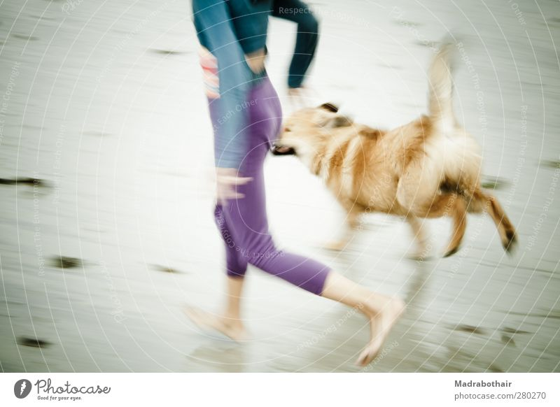 Beach run with dog Joy Athletic Vacation & Travel Summer Summer vacation Feminine Child Girl Life 1 Human being 8 - 13 years Infancy Coast Animal Pet Dog