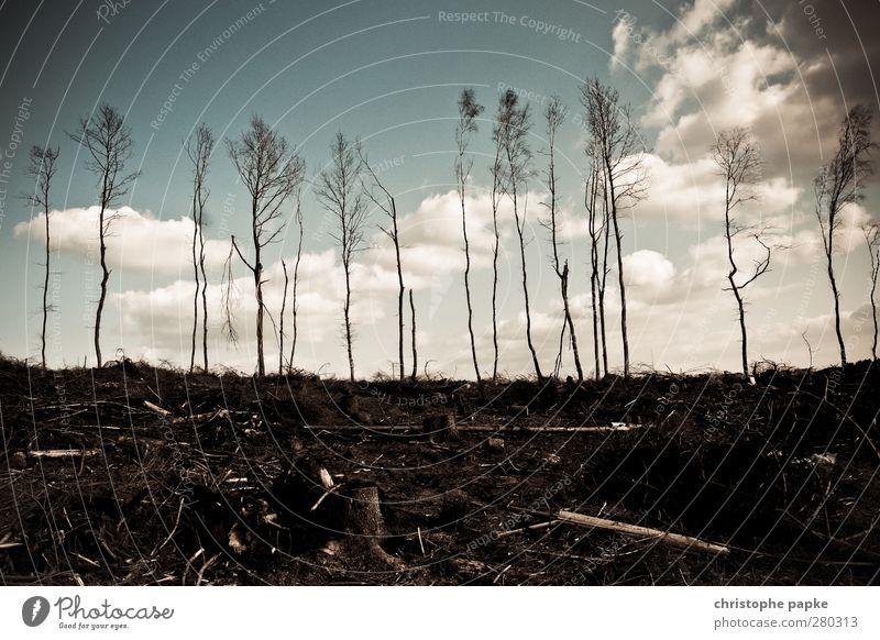 Last Trees Standing Environment Nature Clouds Autumn Climate change Forest Disaster Apocalyptic sentiment Gloomy Forest fire Tree trunk Tree felling Forestry