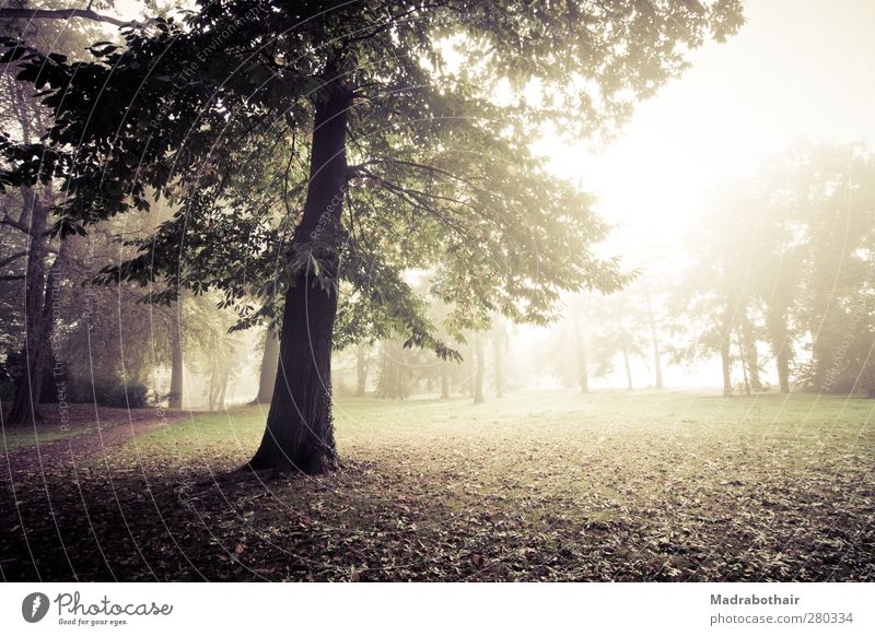 misty morning in the park Nature Landscape Plant Sunlight Autumn Fog Tree Grass Leaf Deciduous tree Park Meadow Forest Calm Environment Transience Change