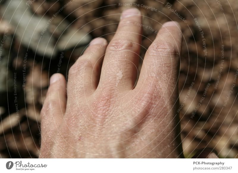 Hand from OFF Masculine Skin Fingers 1 Human being Catch Flying Hunting Wait Hide Wrinkle Wrinkles Brown Autumn leaves Grasp Touch Desire Target Colour photo
